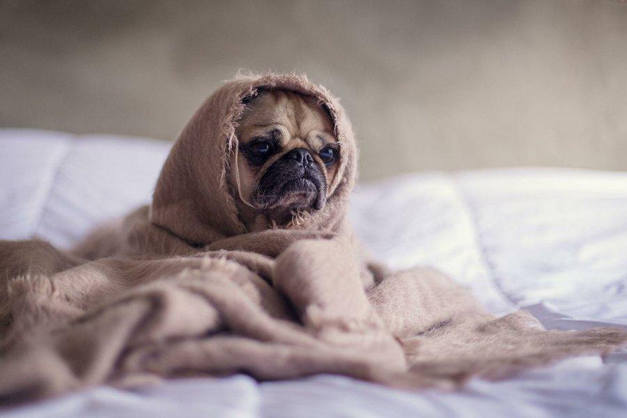 perros frio mimomimascota