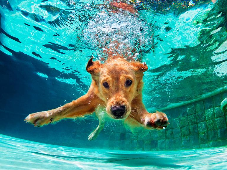 consejos perros calor, valencia, tips calor perros