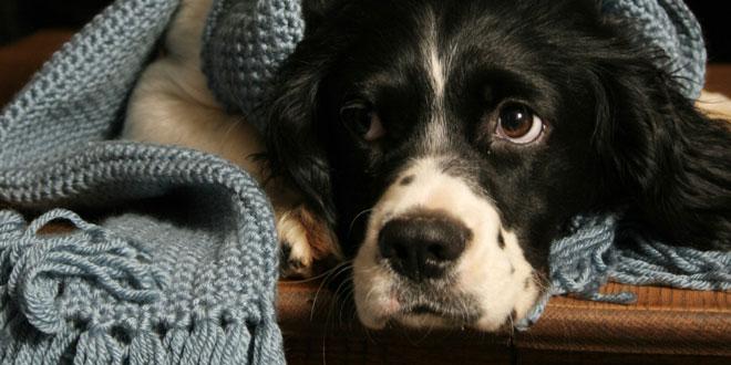perro con frio mimomimascota