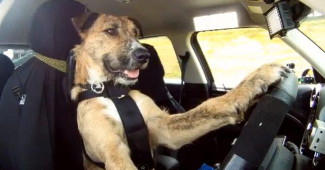 arnes perro coche mimomimascota valencia