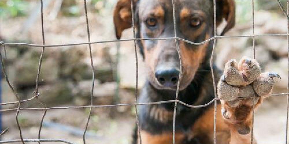 adoptar perros valencia mimomimascota educación canina