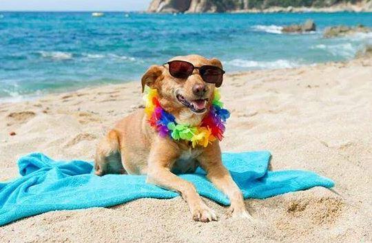 Perros Playa Adiestramiento Valencia Nacho Roca mimomimascota